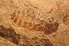 http://mczbase.mcz.harvard.edu/specimen_images/entomology/paleo/large/PALE-3526_Nematocera_1.jpg