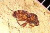 http://mczbase.mcz.harvard.edu/specimen_images/entomology/paleo/large/PALE-35272_Brachycera.jpg