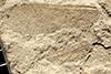 http://mczbase.mcz.harvard.edu/specimen_images/entomology/paleo/large/PALE-35359_Grylloblattodea.jpg