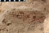 http://mczbase.mcz.harvard.edu/specimen_images/entomology/paleo/large/PALE-3535_Lemmatophora_typa_etho.jpg