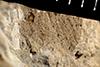 http://mczbase.mcz.harvard.edu/specimen_images/entomology/paleo/large/PALE-35367_Pterygota.jpg