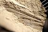 http://mczbase.mcz.harvard.edu/specimen_images/entomology/paleo/large/PALE-35369_Paleuthygrammidae.jpg