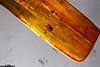 http://mczbase.mcz.harvard.edu/specimen_images/entomology/paleo/large/PALE-35396_Sisyridae_2.jpg
