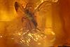 http://mczbase.mcz.harvard.edu/specimen_images/entomology/paleo/large/PALE-35401_syn1_Sciaridae.jpg