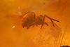 http://mczbase.mcz.harvard.edu/specimen_images/entomology/paleo/large/PALE-35402_Araneae.jpg