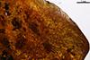 http://mczbase.mcz.harvard.edu/specimen_images/entomology/paleo/large/PALE-35404_Formicidae.jpg