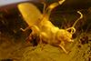 http://mczbase.mcz.harvard.edu/specimen_images/entomology/paleo/large/PALE-35419_Isoptera_2.jpg