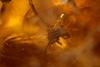http://mczbase.mcz.harvard.edu/specimen_images/entomology/paleo/large/PALE-35430_syn4_Coleoptera_qm.jpg
