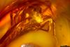 http://mczbase.mcz.harvard.edu/specimen_images/entomology/paleo/large/PALE-35431_Salticidae_2.jpg