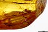 http://mczbase.mcz.harvard.edu/specimen_images/entomology/paleo/large/PALE-35432_Salticidae.jpg