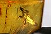 http://mczbase.mcz.harvard.edu/specimen_images/entomology/paleo/large/PALE-35443_syn1_Isoptera_2.jpg