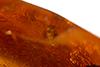 http://mczbase.mcz.harvard.edu/specimen_images/entomology/paleo/large/PALE-35449_syn4_Nematocera.jpg