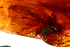 http://mczbase.mcz.harvard.edu/specimen_images/entomology/paleo/large/PALE-35451_syn2_Lepidoptera_2.jpg