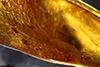 http://mczbase.mcz.harvard.edu/specimen_images/entomology/paleo/large/PALE-35457_Chironomidae_2.jpg