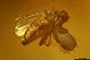 http://mczbase.mcz.harvard.edu/specimen_images/entomology/paleo/large/PALE-35457_syn2_Empidoidea_qm.jpg