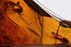http://mczbase.mcz.harvard.edu/specimen_images/entomology/paleo/large/PALE-35473_Nematocera.jpg