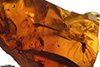 http://mczbase.mcz.harvard.edu/specimen_images/entomology/paleo/large/PALE-35482_Trichoptera.jpg