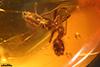 http://mczbase.mcz.harvard.edu/specimen_images/entomology/paleo/large/PALE-35486_Formicidae.jpg