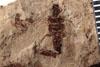 http://mczbase.mcz.harvard.edu/specimen_images/entomology/paleo/large/PALE-3549_Lemmatophera_typa_etho-PartB.jpg