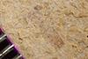 http://mczbase.mcz.harvard.edu/specimen_images/entomology/paleo/large/PALE-35638_Arthropoda.jpg