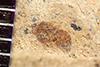 http://mczbase.mcz.harvard.edu/specimen_images/entomology/paleo/large/PALE-35660_Arthropoda.jpg