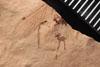 http://mczbase.mcz.harvard.edu/specimen_images/entomology/paleo/large/PALE-3566_Artinska_clara_etho-PartA.jpg