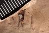 http://mczbase.mcz.harvard.edu/specimen_images/entomology/paleo/large/PALE-3566_Artinska_clara_etho-PartB.jpg