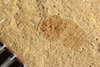 http://mczbase.mcz.harvard.edu/specimen_images/entomology/paleo/large/PALE-35681_Arthropoda.jpg