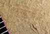 http://mczbase.mcz.harvard.edu/specimen_images/entomology/paleo/large/PALE-35682_Arthropoda.jpg