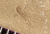 http://mczbase.mcz.harvard.edu/specimen_images/entomology/paleo/large/PALE-35734_Arthropoda.jpg