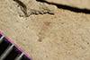 http://mczbase.mcz.harvard.edu/specimen_images/entomology/paleo/large/PALE-35750_Arthropoda.jpg