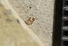 http://mczbase.mcz.harvard.edu/specimen_images/entomology/paleo/large/PALE-35768_Arthropoda.jpg