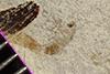 http://mczbase.mcz.harvard.edu/specimen_images/entomology/paleo/large/PALE-35775_Arthropoda.jpg
