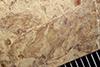 http://mczbase.mcz.harvard.edu/specimen_images/entomology/paleo/large/PALE-35826_Arthropoda_qm.jpg