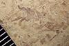http://mczbase.mcz.harvard.edu/specimen_images/entomology/paleo/large/PALE-35830_Arthropoda.jpg