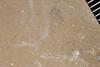 http://mczbase.mcz.harvard.edu/specimen_images/entomology/paleo/large/PALE-35854_Arthropoda.jpg
