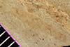 http://mczbase.mcz.harvard.edu/specimen_images/entomology/paleo/large/PALE-35864_Arthropoda.jpg