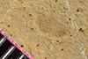 http://mczbase.mcz.harvard.edu/specimen_images/entomology/paleo/large/PALE-35868_Arthropoda.jpg