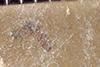http://mczbase.mcz.harvard.edu/specimen_images/entomology/paleo/large/PALE-35966_Arthropoda.jpg