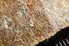 http://mczbase.mcz.harvard.edu/specimen_images/entomology/paleo/large/PALE-35983_Arthropoda.jpg