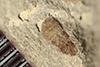 http://mczbase.mcz.harvard.edu/specimen_images/entomology/paleo/large/PALE-36089_Arthropoda.jpg