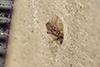 http://mczbase.mcz.harvard.edu/specimen_images/entomology/paleo/large/PALE-36090_Arthropoda.jpg