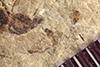 http://mczbase.mcz.harvard.edu/specimen_images/entomology/paleo/large/PALE-36100_Arthropoda.jpg