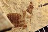 http://mczbase.mcz.harvard.edu/specimen_images/entomology/paleo/large/PALE-36271_Arthropoda.jpg