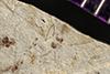 http://mczbase.mcz.harvard.edu/specimen_images/entomology/paleo/large/PALE-36319_Arthropoda.jpg