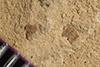 http://mczbase.mcz.harvard.edu/specimen_images/entomology/paleo/large/PALE-36369_Arthropoda.jpg