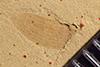 http://mczbase.mcz.harvard.edu/specimen_images/entomology/paleo/large/PALE-36397_Arthropoda.jpg