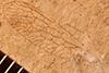 http://mczbase.mcz.harvard.edu/specimen_images/entomology/paleo/large/PALE-3640a_Raphidia_pulveris_holotype.jpg