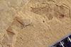 http://mczbase.mcz.harvard.edu/specimen_images/entomology/paleo/large/PALE-36436_Arthropoda.jpg