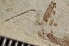 http://mczbase.mcz.harvard.edu/specimen_images/entomology/paleo/large/PALE-36507_Arthropoda.jpg